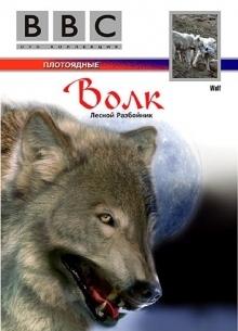 BBC. Волк: Лесной разбойник - фильм (2006) на сайте о хорошем кино Устрица