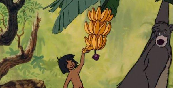 Книга джунглей - мультфильм (1967). Кадр из мультфильма