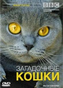 BBC: Загадочные кошки - фильм (2002) на сайте о хорошем кино Устрица