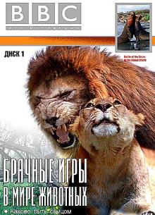 BBC: Брачные игры в мире животных (Часть 1) - фильм (1999) на сайте о хорошем кино Устрица