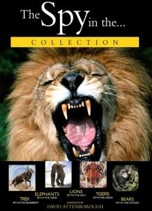 BBC: Лев - фильм (2000) на сайте о хорошем кино Устрица